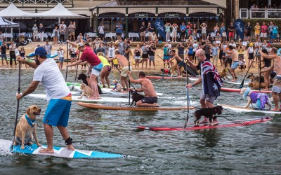 Man and Dog SUP race