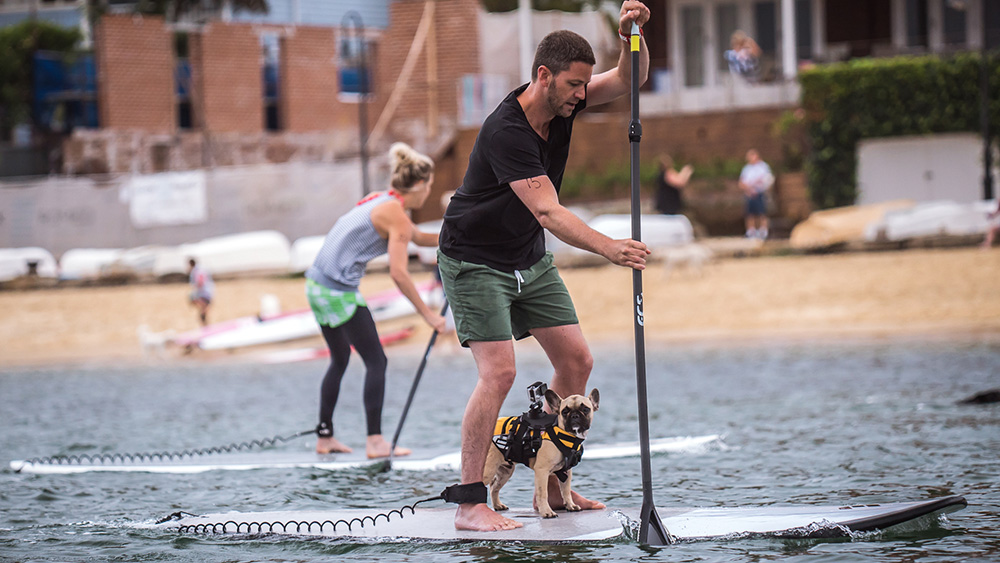 man and dog stand up paddle race