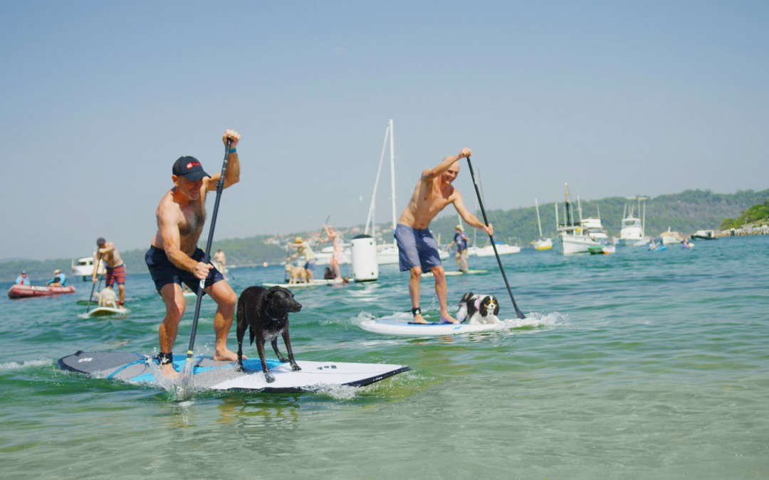 Every Man and His Dog – Australia Day 2019 – The Results are in!